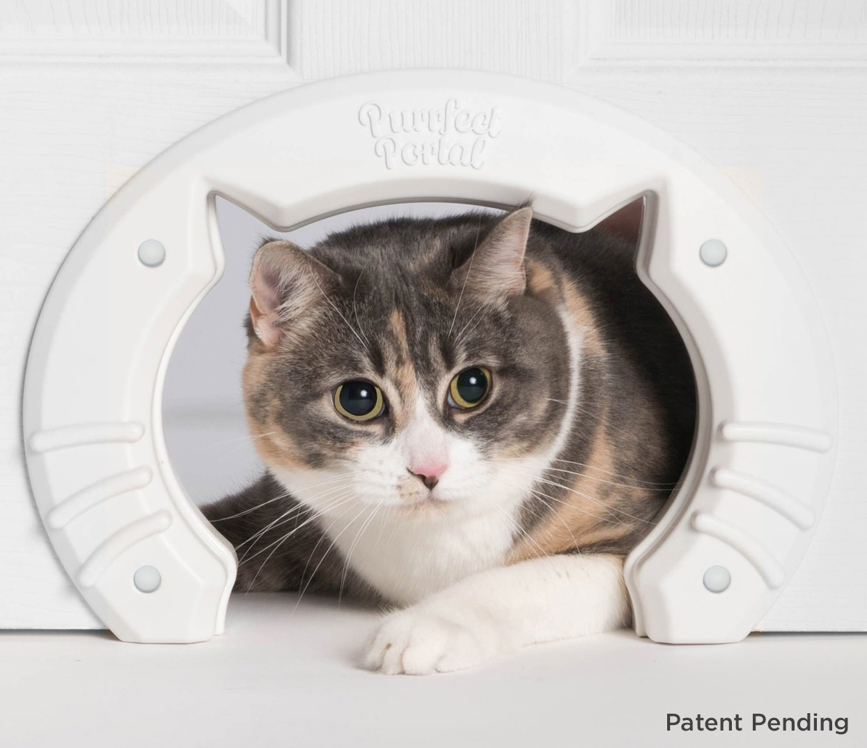 Built In Interior Pet Cat Door Celestes Toys And Gifts